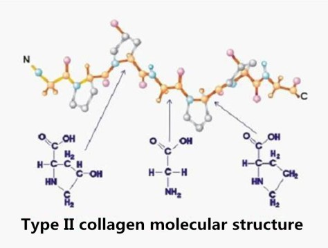 type2collagen